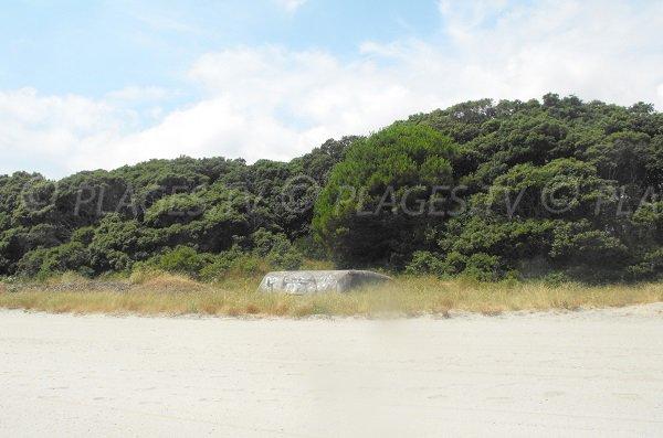 Environnement de la plage de Padulone à Cervione