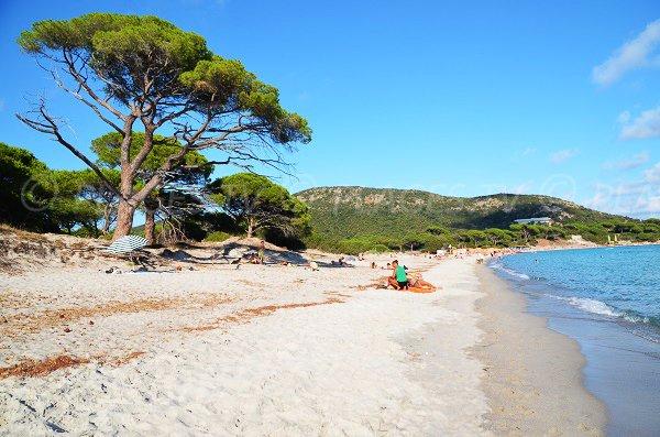 Photo de la principale plage de Palombaggia en Corse