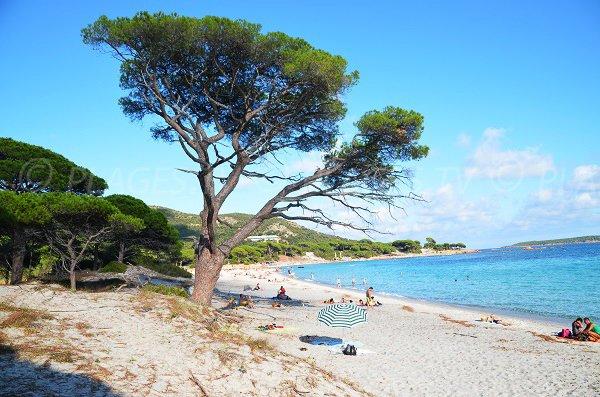 Photo de la plage de Palombaggia en Corse - Porto Vecchio