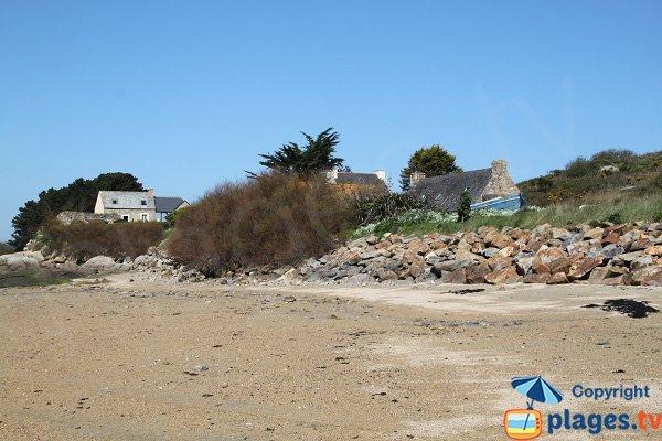 Tamaris sur la plage de l'ile de Caillot