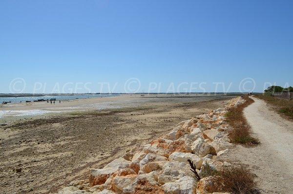 Photo de la plage de la Patache aux Portes en Ré