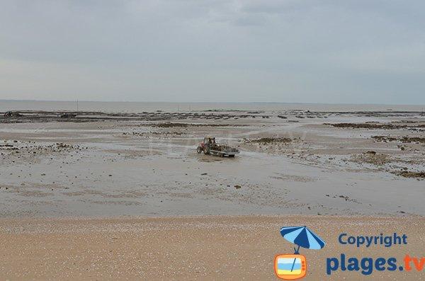 Tracteur sur la plage de la Pecherie à Les Moutiers en Retz