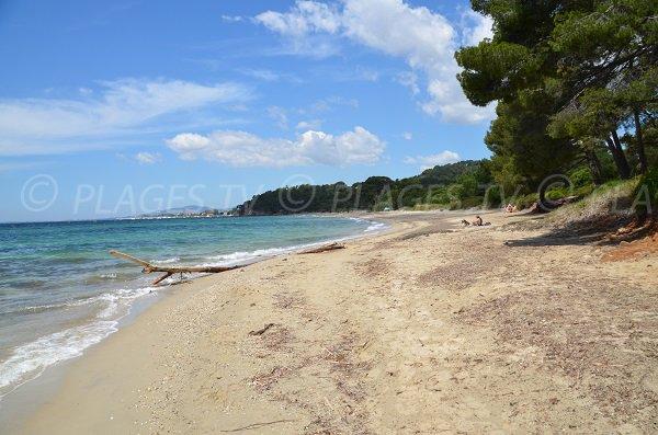 Shaded beach in Bormes les Mimosas - Pellegrin