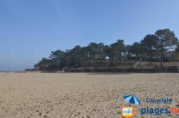 Pinède de la plage Pereire - Arcachon