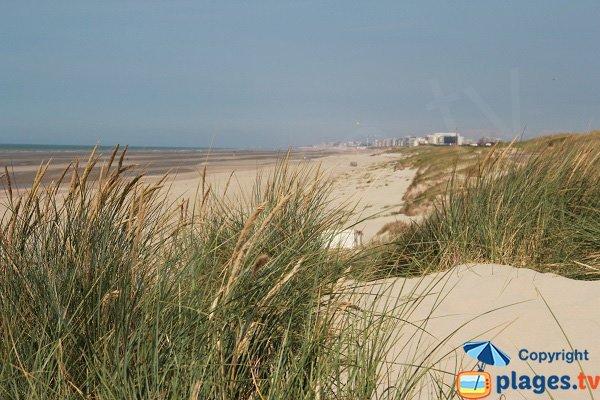 Dunes du Perroquet avec sa plage - Bray-Dunes