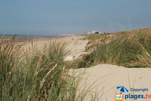 Photo de la plage du Perroquet à Bray Dunes