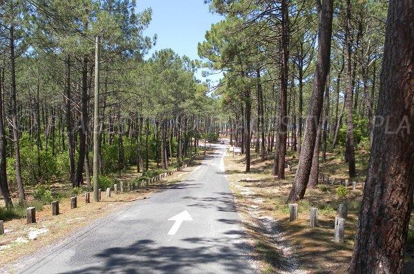 Forêt à côté de la plage du Petit Nice