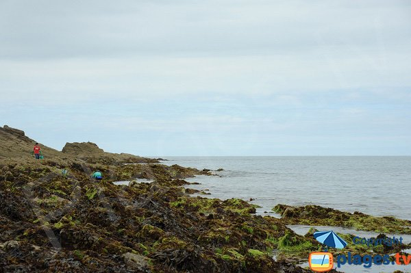 Pêche à pied sur la plage du Petit Port - Cancale