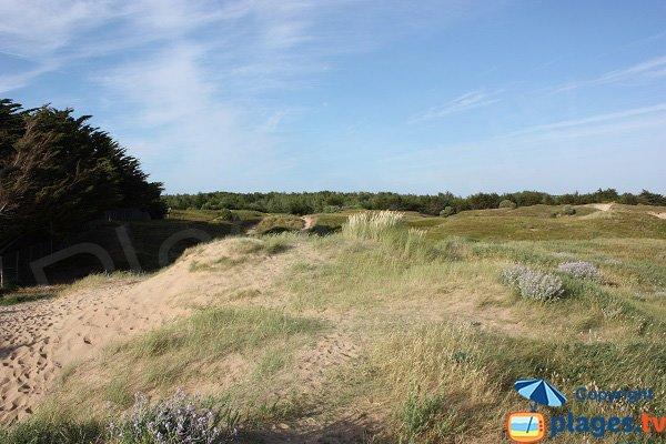 Ambiente della spiaggia di Petit Sochard