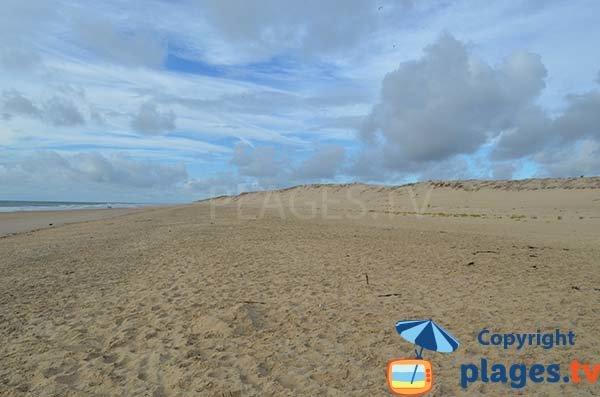 Great beach where dogs are allowed near Royan - La Tremblade