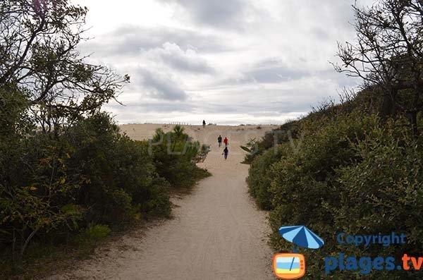 Access to Coubre beach - La Tremblade