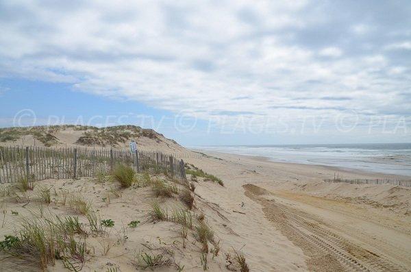 Environnement de la plage de Naujac sur Mer en Gironde