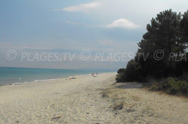 Wild beach in Ghisonaccia in Corsica
