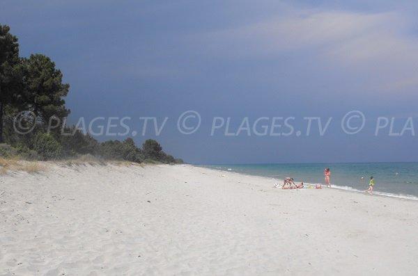 Photo de la plage de Pinia - Corse Ghisonaccia