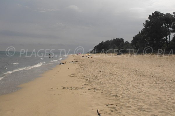 Plage de sable fin peu connue en Corse - Pinia - Ghisonaccia