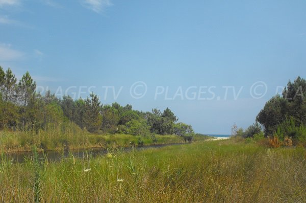 Cours d'eau à Pinia avec vue sur la plage