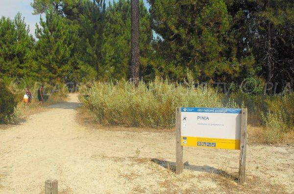 Piste pour accéder à la plage de Pinia - Corse
