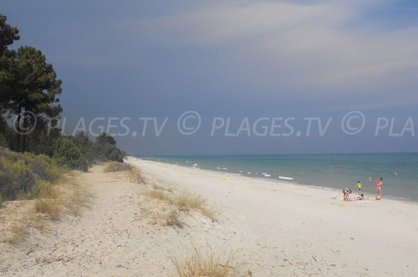 Pinia beach in Ghisanaccia in Corsica