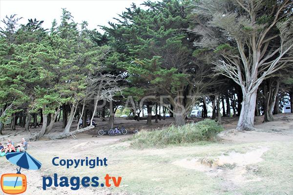Parc ombragé à côté de la plage de la pointe du Bill à Séné