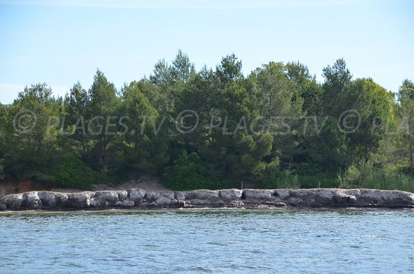 Posidonies sur la plage de la pointe du Pellegrin à Bormes les Mimosas