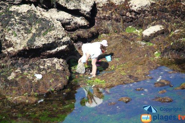 Pêche à Sauzon dans la crique de Porh Kerzo
