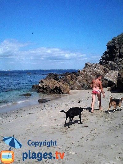 Chiens sur les plages à Groix