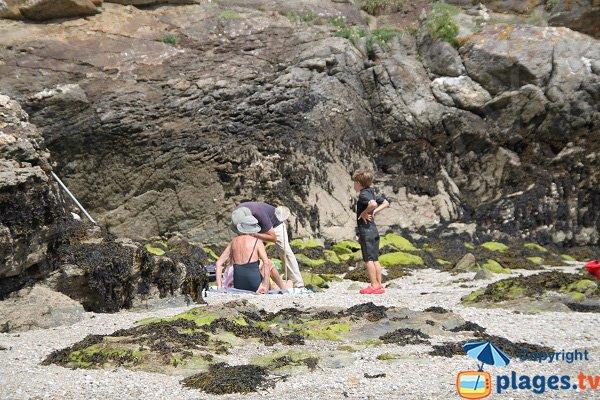 Algues sans danger à Belle Ile