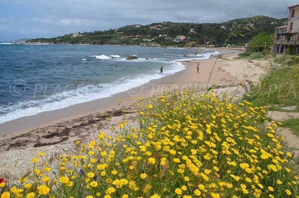 Portigliolo beach in Coti Chiavari in Corsica