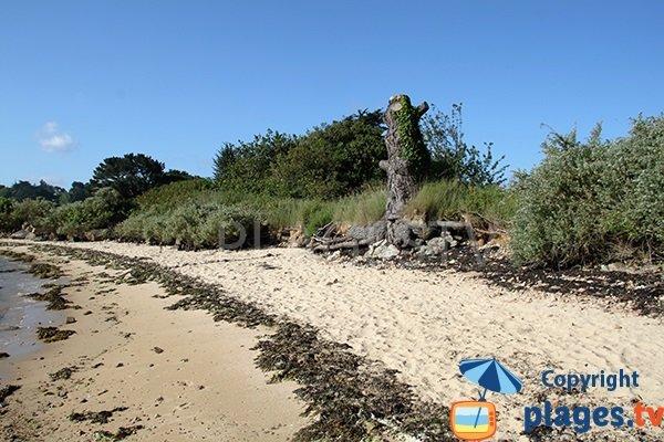 plage de Porz-Buguéles à Penvénan