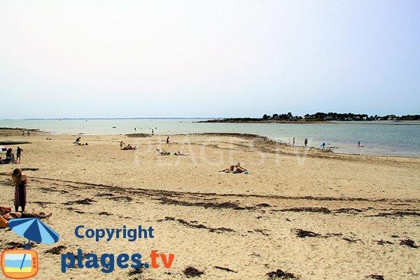 Baignade sur la plage de Poulbert à La Trinité sur Mer