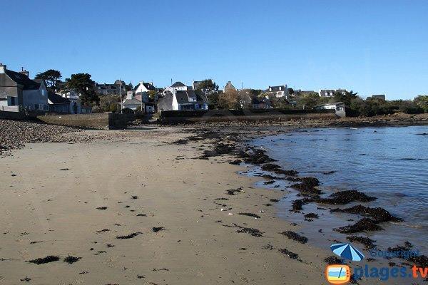 Algues sur la plage de Quinquai - Plougasnou