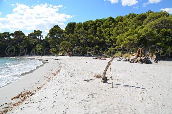 Photo de la plage sauvage de la Reine Jeanne dans le Var