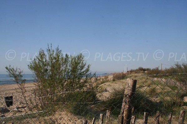 Environnement de la plage ouest de Marseillan