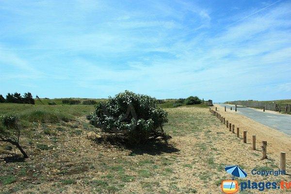 Environnement de la plage de Riez