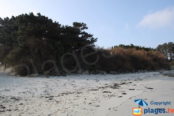 Vegetation on the beach of St Jean de Santec