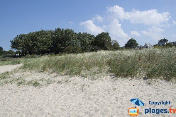Environnement de la plage du Ruet
