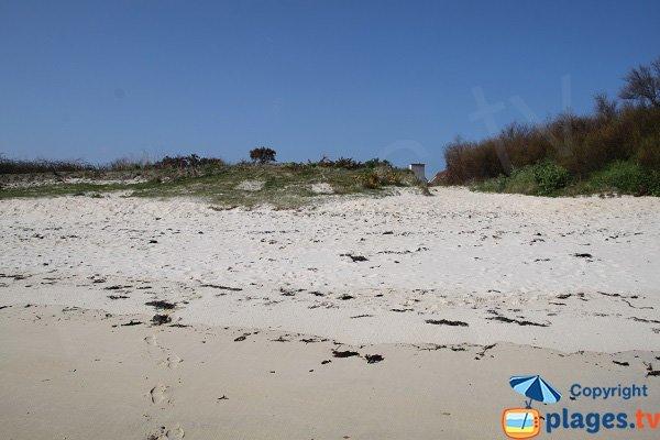 Dog friendly beach in Brittany - Roscoff