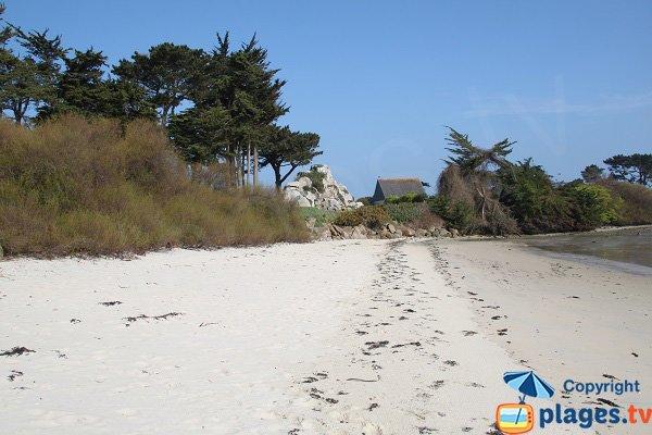 Plage de sable blanc à Roscoff
