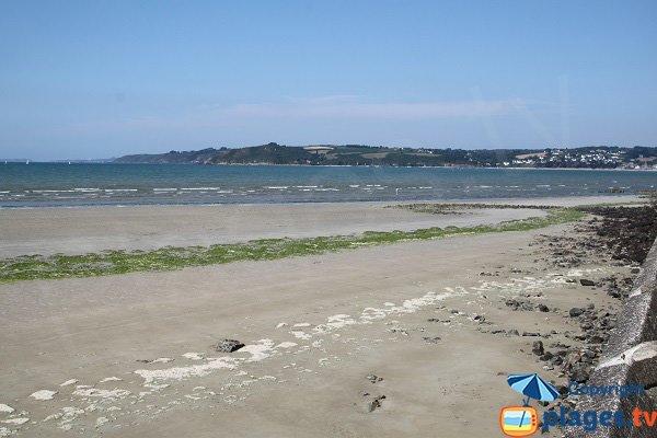 Algues vertes sur la plage de Saint Efflam