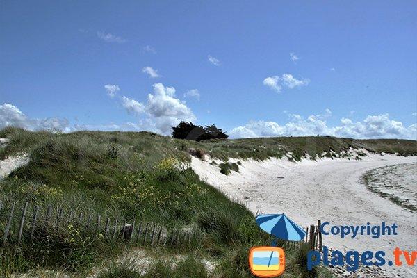 Espace dunaire de la plage de Ste Marguerite à Landéda