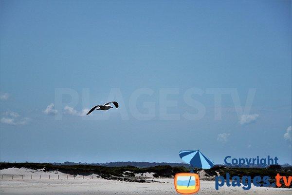 Oiseaux sur la plage de Ste Marguerite