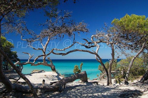Most beautiful beach in Corsica