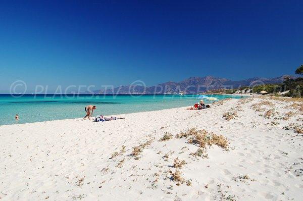 Photo de la plage de Saleccia en Corse