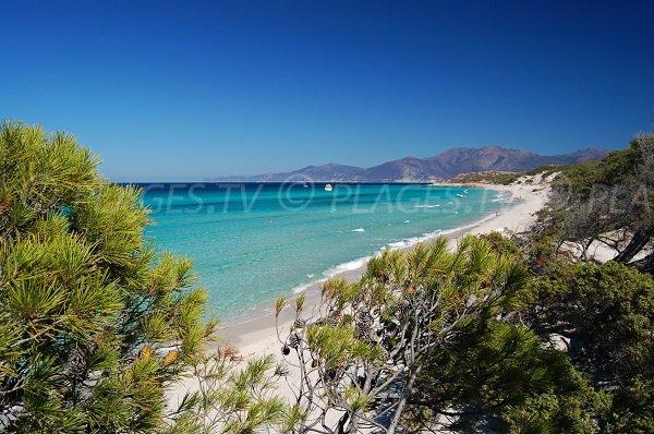 Environnement de la plage de Saleccia (Corse)