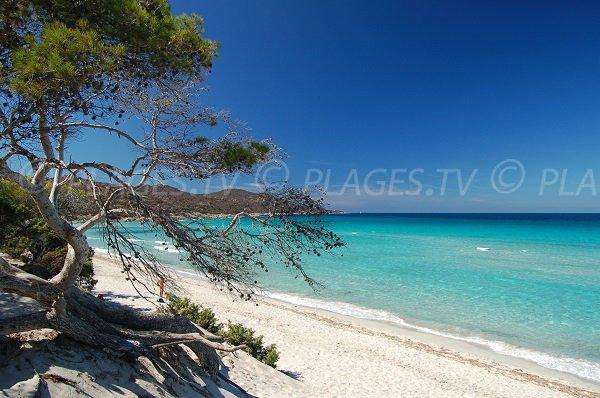 Saleccia beach in Corsica - Saint Florent