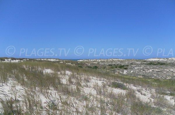 Dunes of Salie North beach in Pyla