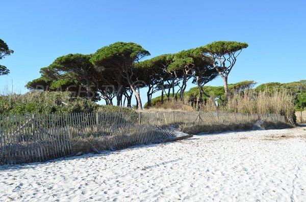 White sand on the Salins beach