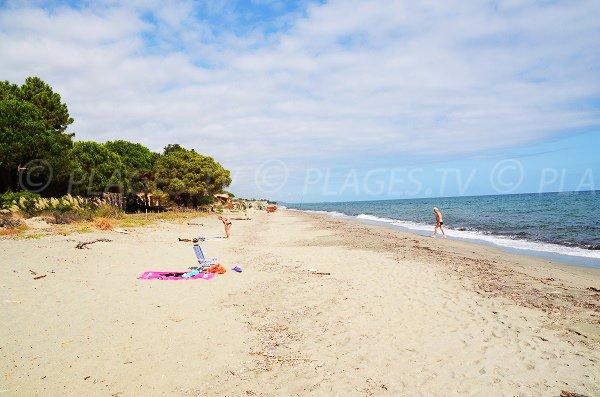 Photo de la plage de San Giuliano en Corse