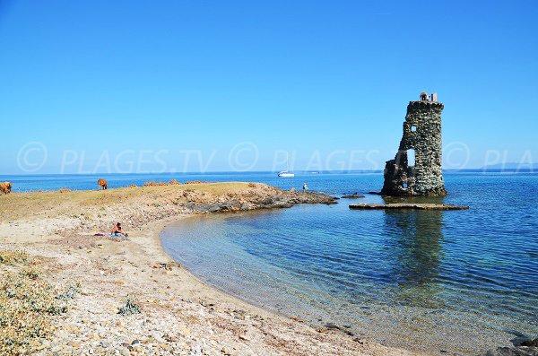 Spiaggia e torre di Santa Maria in Corsica (Macinaggio)