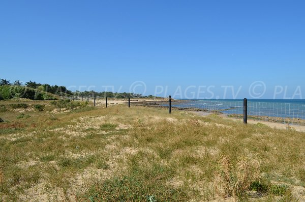 Photo de la plage de la Saucière - Les Portes en Ré
